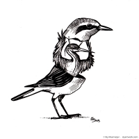 2015 09 00 Art - Sketch Northern Wheatear costume