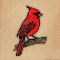 2016 05 29 Art - Northern Cardinal