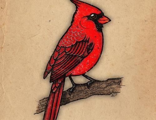 Nothern Cardinal (2016)